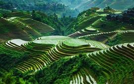 Guangxi Longsheng terrazas de arroz, hermoso paisaje, China