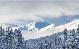 Kenai горы, деревья, снег, толстый Чугач, Аляска, США