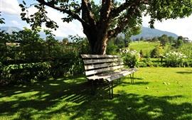 Kitzbuhel, Áustria, verão, árvores, banco, grama