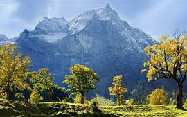 Maple trees, snow-covered mountains, autumn, Karwendel, Austria