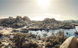 Mojave Desert, lake, grass, rocks, Joshua Tree National Park, California, USA