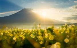 Montaña, rayos del sol, salida del sol, hierba, rocío, llamarada, bokeh