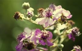 pétales pourpres fleurs, bokeh, fond vert