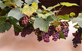 Preview wallpaper Red grapes, leaves, autumn, harvest