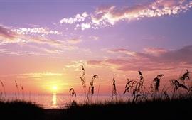 Море, закат, трава, Venice Beach, Флорида, США