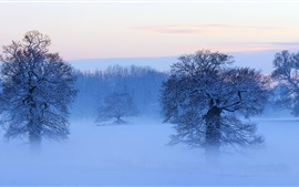 Snow covered trees, mist, dusk, winter, France