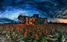 Sorghum fields, countryside, house, clouds, dusk