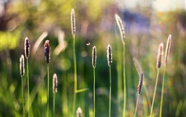 Preview wallpaper Summer grass, insect, spikes, flare, bokeh