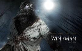壁紙のプレビュー ウルフマン、2010年の映画
