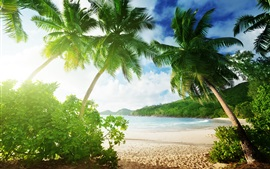 Preview wallpaper Tropical beach, palm trees, sand, sea, coast, clouds