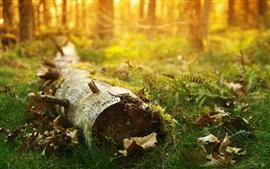 Tronco, hojas, hierba, bokeh, rayos del sol