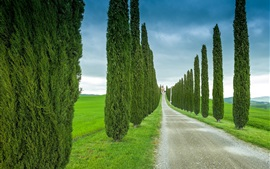Preview wallpaper Tuscany, Italy, road, grass, cypress