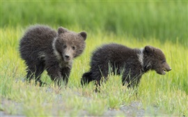 Preview wallpaper Two bears, cubs, kids, grass