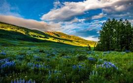 EUA, Colorado, belos natureza, montanhas, prados, flores