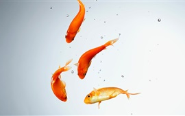 Preview wallpaper Aquarium, goldfish, water, bubbles