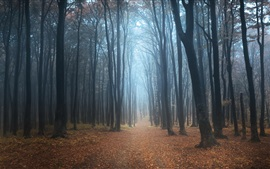 Autumn forest, trees, mist, dawn