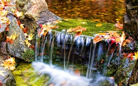 Preview wallpaper Autumn nature, stream, water, leaves