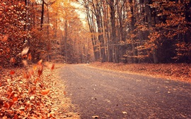 Preview wallpaper Autumn, trees, red leaves, road