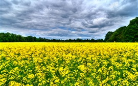 Preview wallpaper Beautiful canola flowers field, trees, clouds
