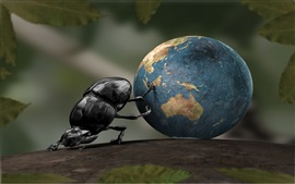 Preview wallpaper Beetle move the earth, creative pictures