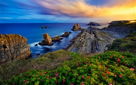 壁紙のプレビュー コスタ・ケブラーダ、カンタブリア、スペイン、ビスケー湾、花、岩、日没
