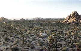Desert at sunset, plants, rocks, pond, Joshua Tree National Park, California, USA