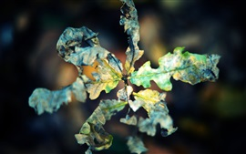 Preview wallpaper Dry leaf macro photography, autumn, bokeh
