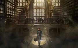 Preview wallpaper Fantastic Beasts and Where to Find Them