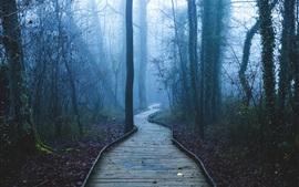Тропа, деревья, лес, туман, рассвет