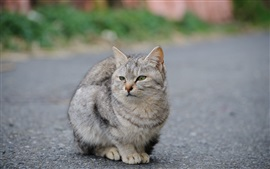 Gray cat at road