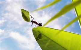 Insect ants, green leaves, clouds, blue sky