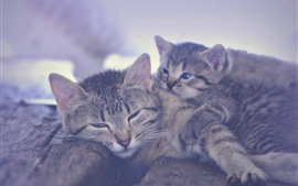 Preview wallpaper Kitten and motherhood sleeping