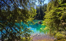 Preview wallpaper Lake Carezza, Italy nature landscape, trees, branches