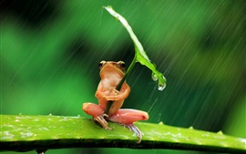 Preview wallpaper Lonely frog, rain, leaf, water drops