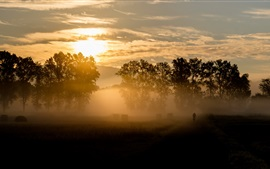 Preview wallpaper Morning, sunrise, clouds, trees, fog