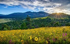 Preview wallpaper Mountains, flowers, valleys, sky, clouds, sunset