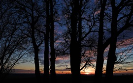 Night, clouds, sunset, trees silhouette