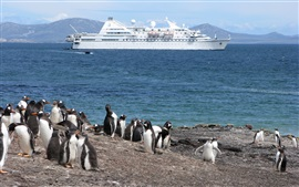 Penguin, costa, mar, navio
