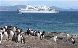 Pingüino, costa, mar, barco