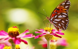 Preview wallpaper Pink flowers, butterfly, insect, bokeh