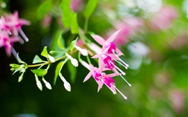 Preview wallpaper Pink fuchsia, bokeh