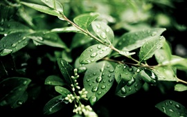 Preview wallpaper Plants, after rain, green leaves, water drops