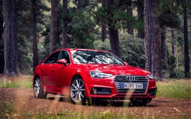 Red Audi A4 Sedan, bosque, hierba