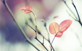 Red leaves, branches, soft focus