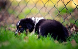 Preview wallpaper Sadness dog in grass, fence