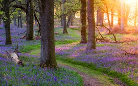 Scotland beautiful nature, forest, trees, grass, flowers, morning, sun rays