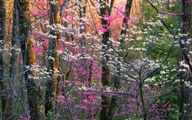 Shenandoah National Park, flowers, trees, Virginia, USA