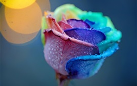 Preview wallpaper Special rose, colorful colors petals, dew