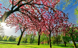 Preview wallpaper Spring tree flowers, pink, bloom, green grass