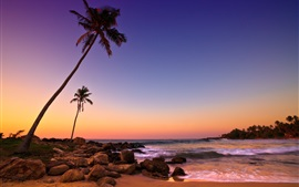 Preview wallpaper Sri Lanka sunset, sea, coast, beach, rocks, palm trees
